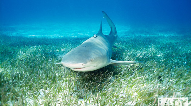 Топ 8 экскурсий по Карибскому бассейну