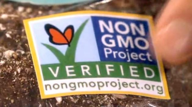 7 вещей, которые необходимо знать о ГМО